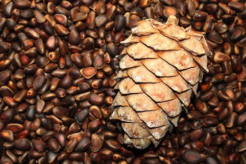Орехи кедровые и сперма