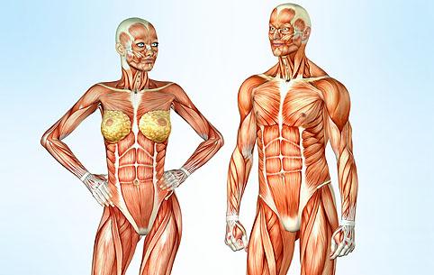 Наращивание мышц нелегкая задача